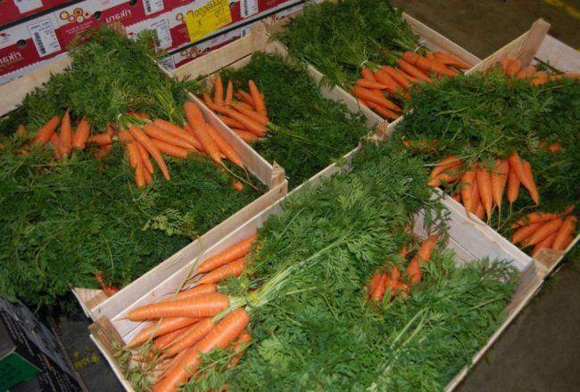 hranenie morkovi zimoj