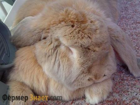 Як позбавиться від проблем травлення у кроликів