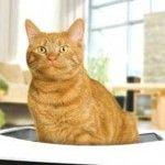 Як позбавиться від запаху котячої сечі в квартирі - способи і засоби