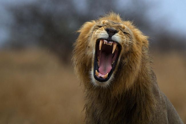 Леви теж обожнюють масаж