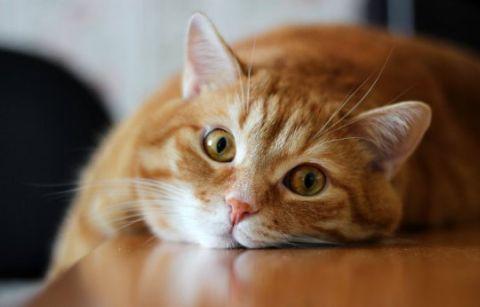 Як змінюється поведінка кота після кастрації - особливості подальшому житті