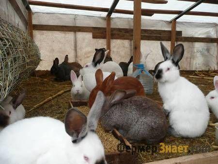 Кролики в вольєрі
