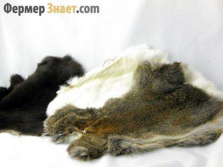 Вироблення кролячих шкурок в домашніх умовах