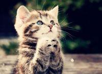 Як карати кішку