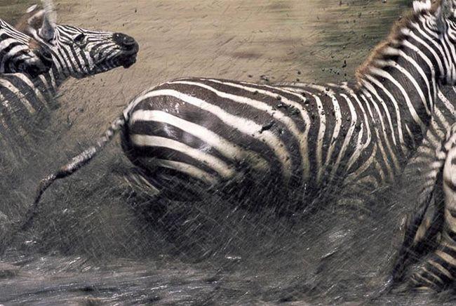 Тварин відвезли приблизно на 200 км від початкового місця проживання.
