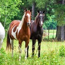 Як підібрати гарну і оригінальну кличку для улюбленого коня?