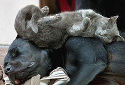 Як подружити собаку з людьми і тваринами? Як прибрати агресію до інших собакам, котам і людям?