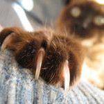 Як підстригти кішці кігті, або котячий манікюр