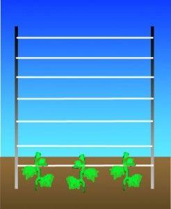 Як підв`язувати огірки?