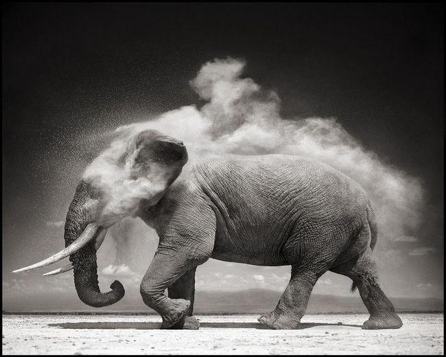Чому слони не хворіють на рак