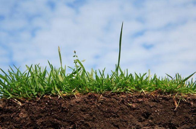 Кислотність грунту для посадки смородини
