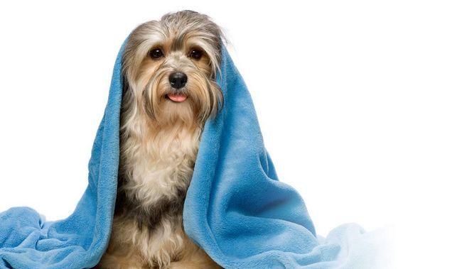 Кожному собаці необхідна регулярна чистка.