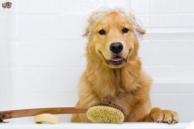 Для чищення собаки можна використовувати щітку.