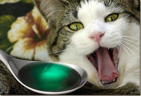 Як правильно дати таблетку вашій кішці - кращі способи