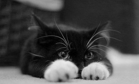 Як правильно виміряти температуру у кішки і не бути подряпаним?