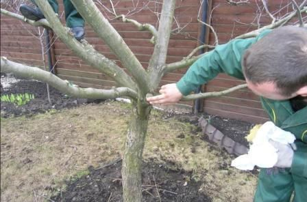 обрізка дерев взимку
