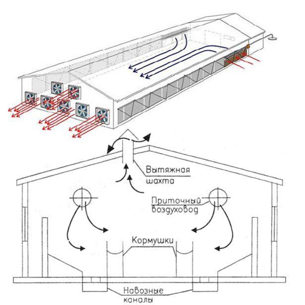 Вентиляція в свинарнику схема