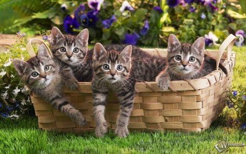 Як правильно прийняти пологи у кішки - поради і правила