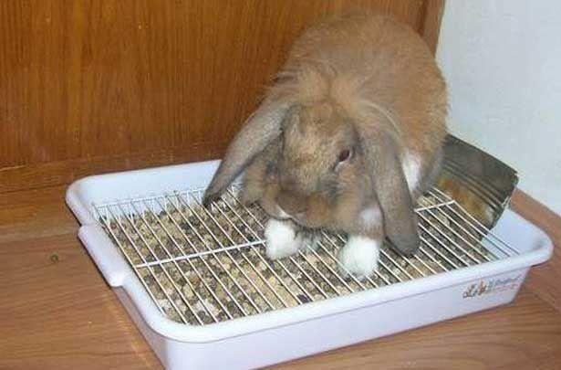 Кролик сидить в лотку