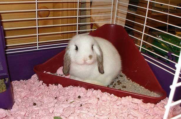 Кролик в кутовому лотку