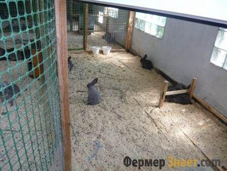 Розведення кроликів в вольєрі