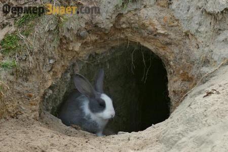 Ямне зміст кролів