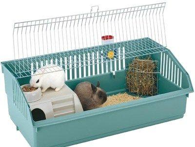 Два кролика в клітці