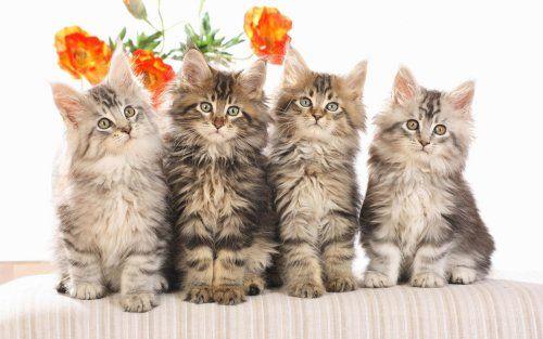 Як правильно вибрати котячі імена для дівчаток?