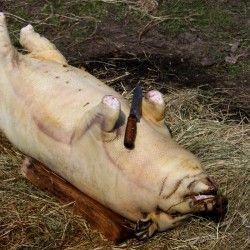Як правильно забити свиню