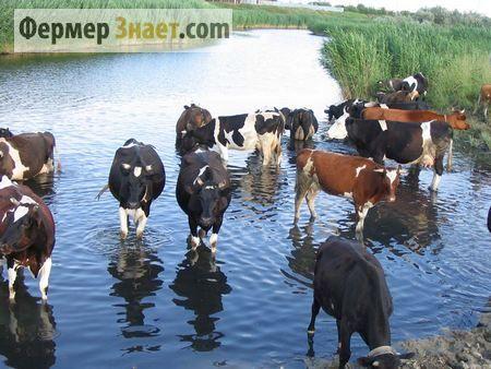 Як запобігти зараженню тварин фасциолезом?