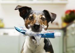 Собака-в-зубної-пасті