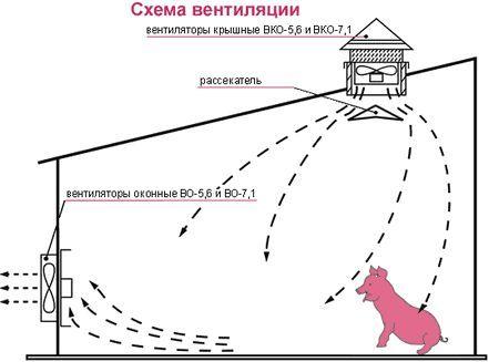 Як самому побудувати свинарник