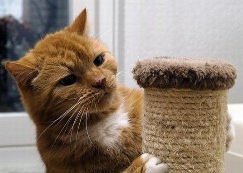 Як зробити когтеточку для кішок своїми руками?