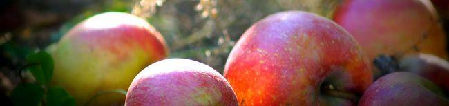 Як зберегти яблука на зиму - методи досвідчених садівників