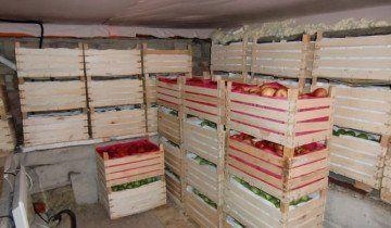 Яблука можна зберігати в ящиках, ilja.ru