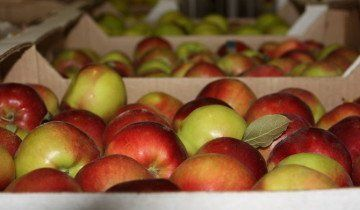 Зберігання яблук в коробках, gazzilot.net