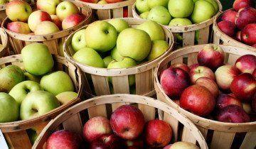 Сортування яблук за розміром, fhwa.dot.gov