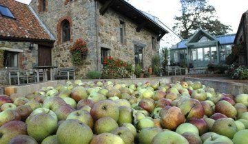 Перевірка лежкости яблук, rocquettecider.com