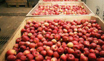 Зберігання яблук, articles.agronationale.ru