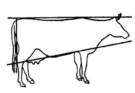 як вибрати молочну корову за формою тулуба