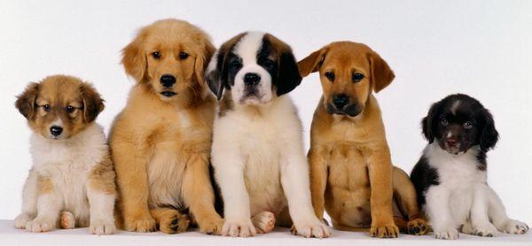 Породи собак