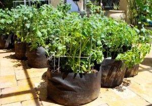 Як вирощувати картоплю в мішках для економії простору?