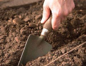 Грунт для посадки баклажанів