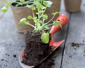 Як виростити зелень у теплиці