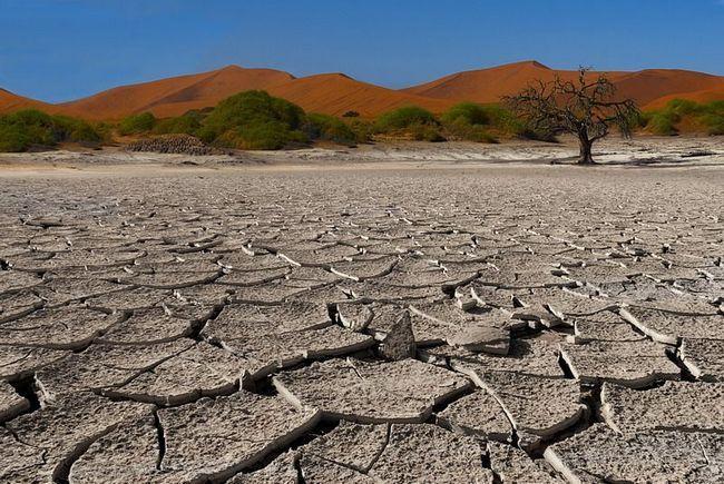 Як вижити в пустелі?