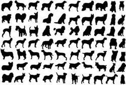 Най-най собаки: рекорди собак в книзі рекордів гиннесса
