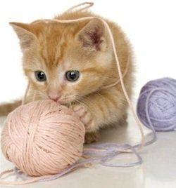 Які іграшки подобаються кішкам і як зробити їх своїми руками