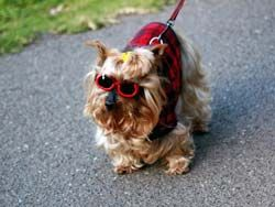 Які породи собак найкрасивіші? Які породи користуються великими симпатіями у людей?