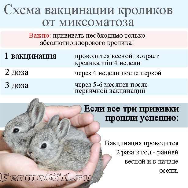 схема вакцинації кроликів від міксоматозу