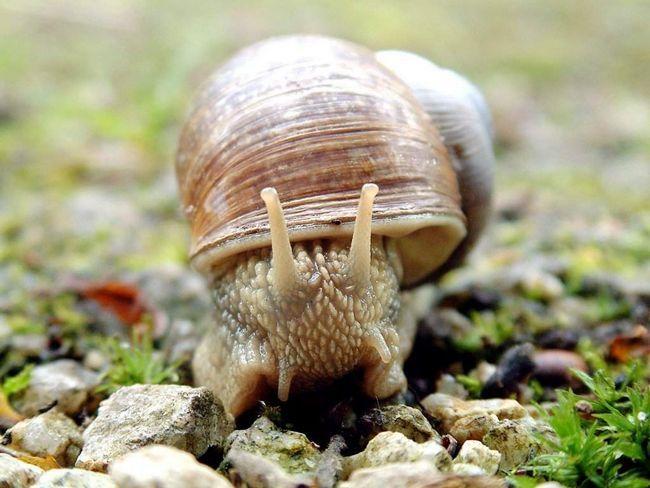 Молюски (Mollusca).